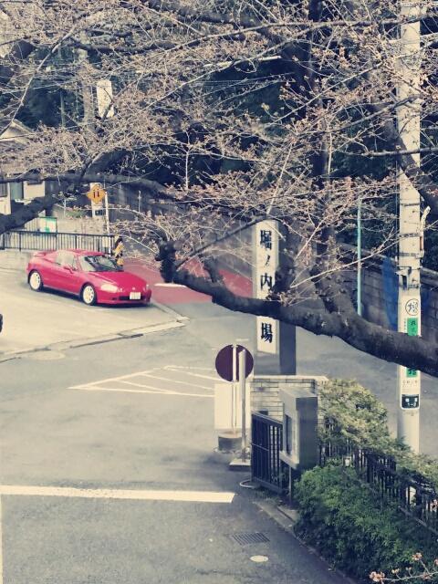 杉並区堀ノ内斎場と桜