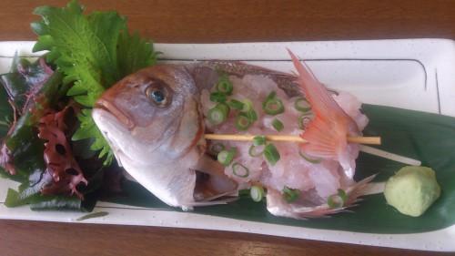 1月旬の魚料理 小鯛のタタキとマトウダイの刺身