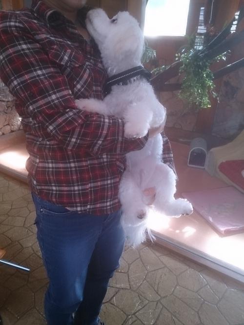 大好きな飼い主さんに抱っこされて大満足♪