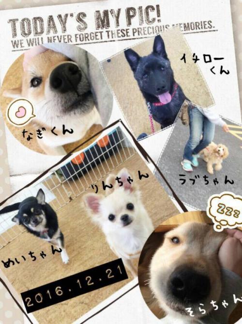 ベネズエラの犬事情から日本を見てみる