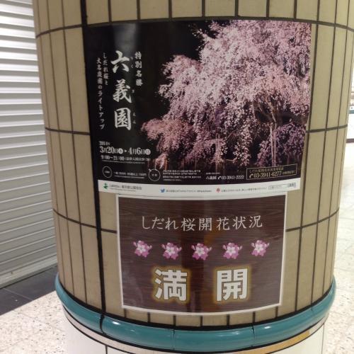 ご近所情報☆六義園も桜満開(((o(*゚▽゚*)o)))