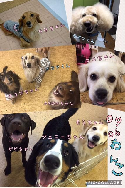 愛犬の肥満に注意!