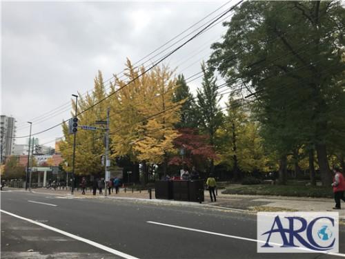 紅葉の季節☆札幌市内も銀杏(イチョウ)の木がきれいですね★
