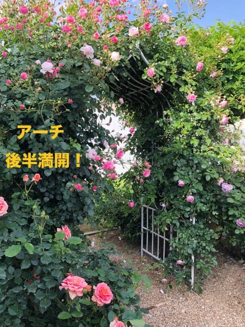 ガーデンプランタン:撮影ポイント5(後半満開)