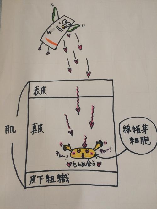 線維芽細胞!