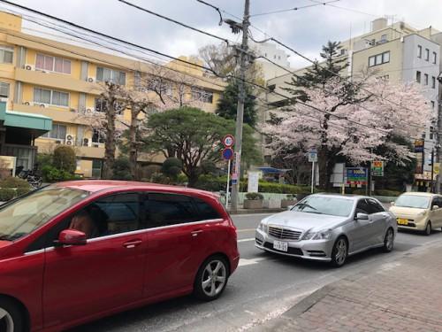 2019,桜