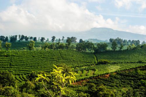 アラビカ種100%のコスタリカコーヒー