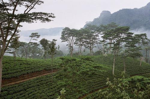 スリランカ(セイロン)の紅茶