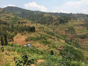 アフリカのニュースター『ルワンダコーヒー』