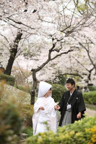 2020隅田公園桜開花間近・結婚写真撮るなら今!