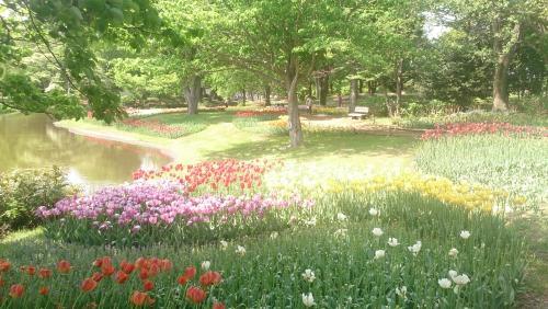 昭和記念公園★(  ´∀`)